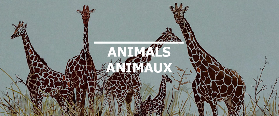 Picture of Animals
