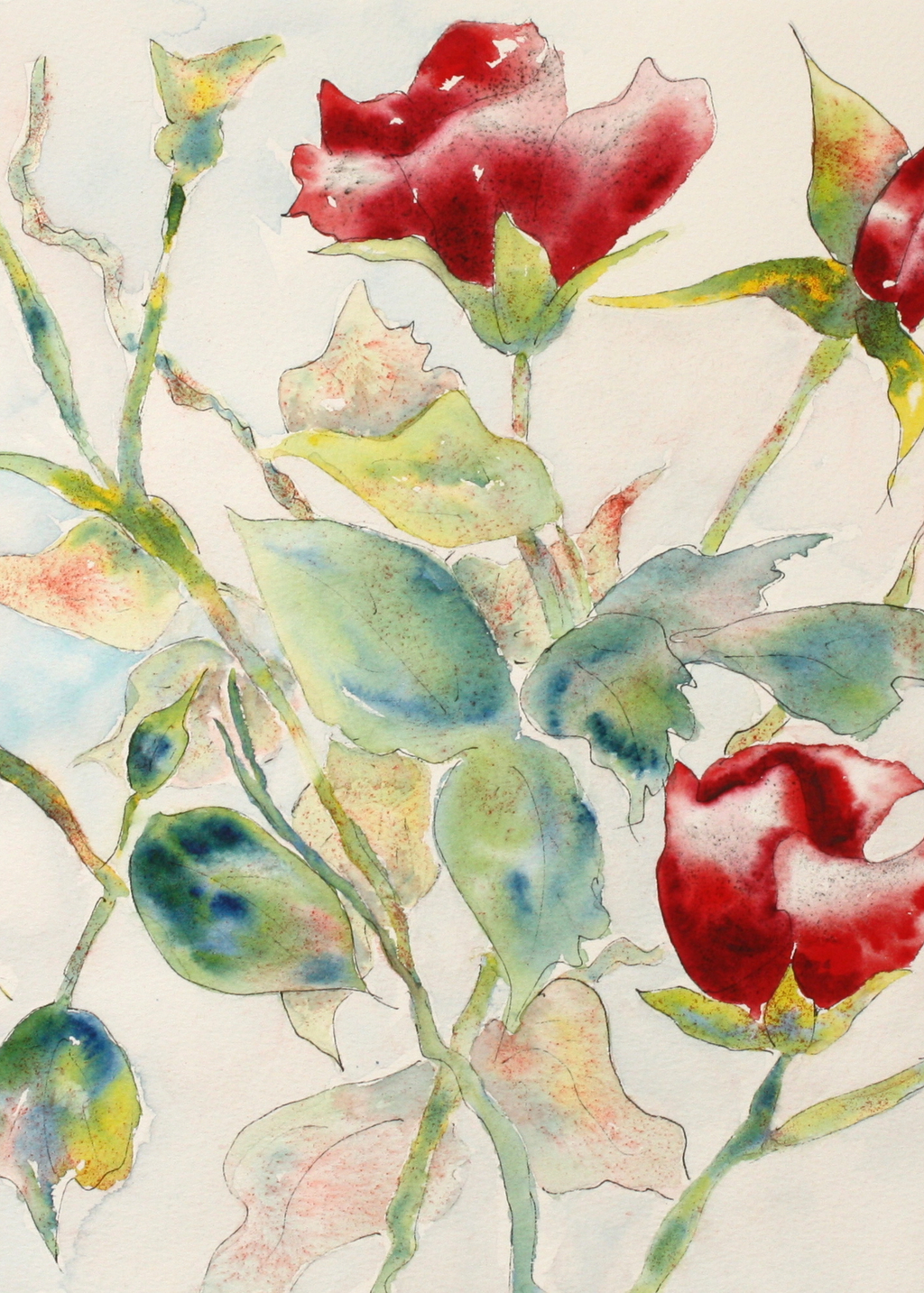 Picture of Grouping of Roses