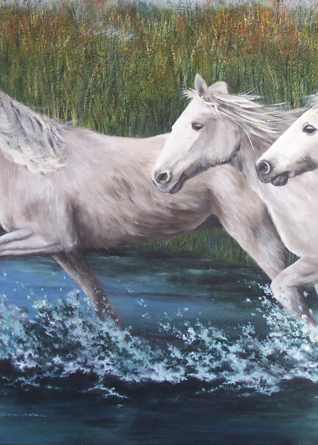 Picture of Wild horses of the Camargue