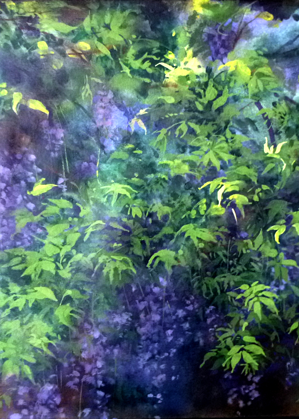 Picture of Afternoon Wisteria