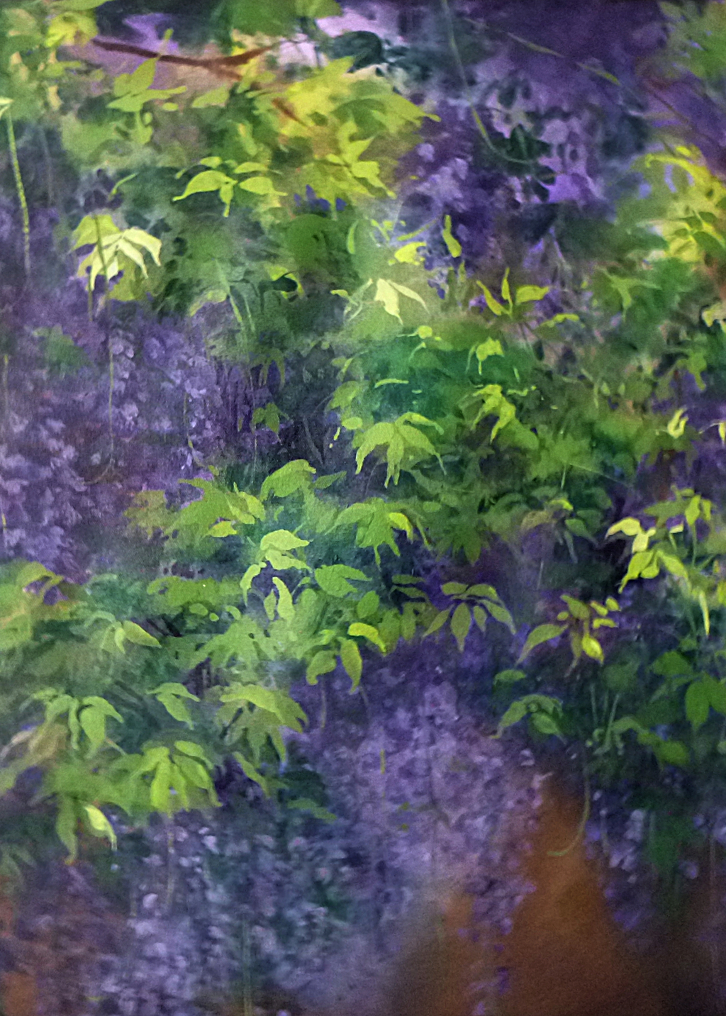 Picture of Spring Wisteria