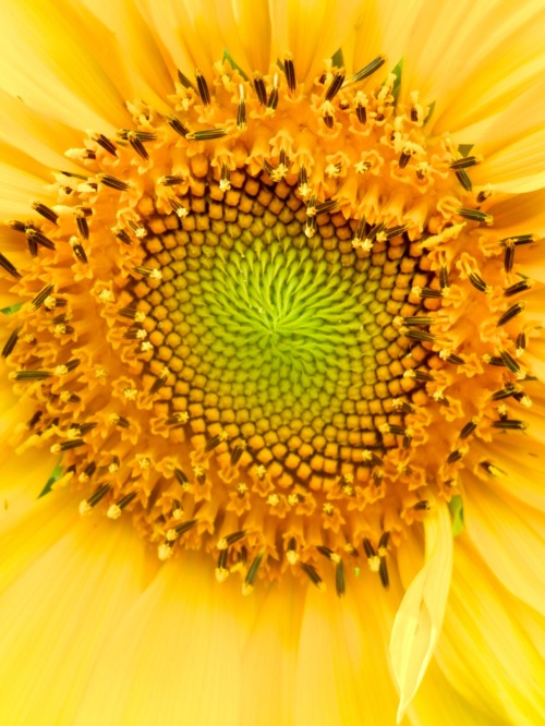 Picture of 2013 garden sunreach