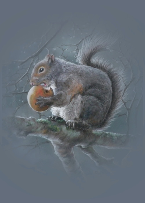 Picture of Grey Squirrel
