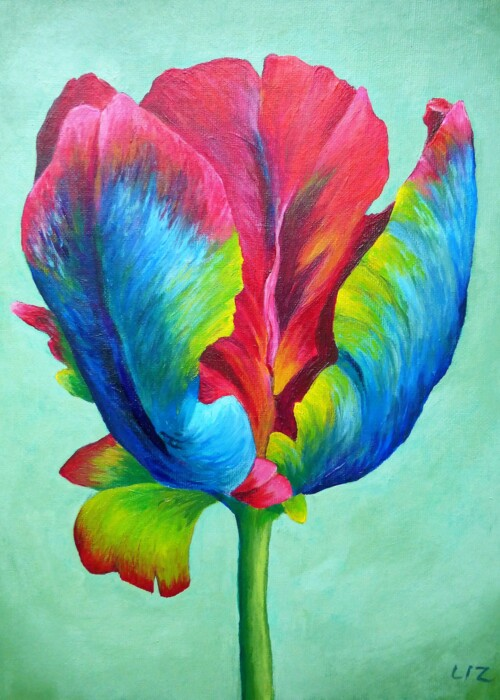 Picture of Rainbow Tulip #1
