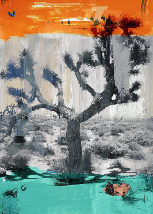 Picture of Joshua Tree II