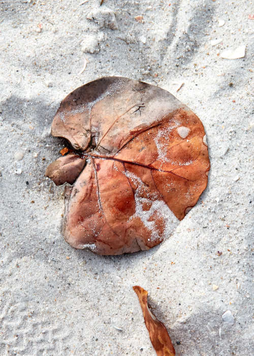 Picture of Leaf in the Sand