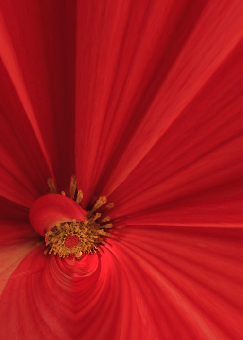 Picture of Red Passion
