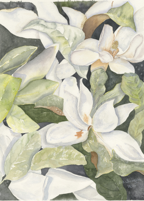 Picture of Magnolias
