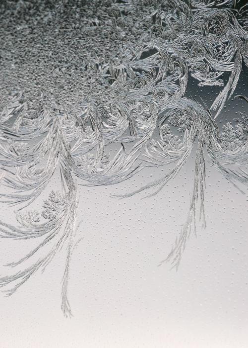 Picture of Paris Frost