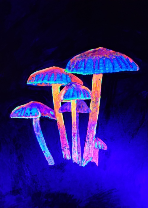 Picture of MUSHROOM GLOW