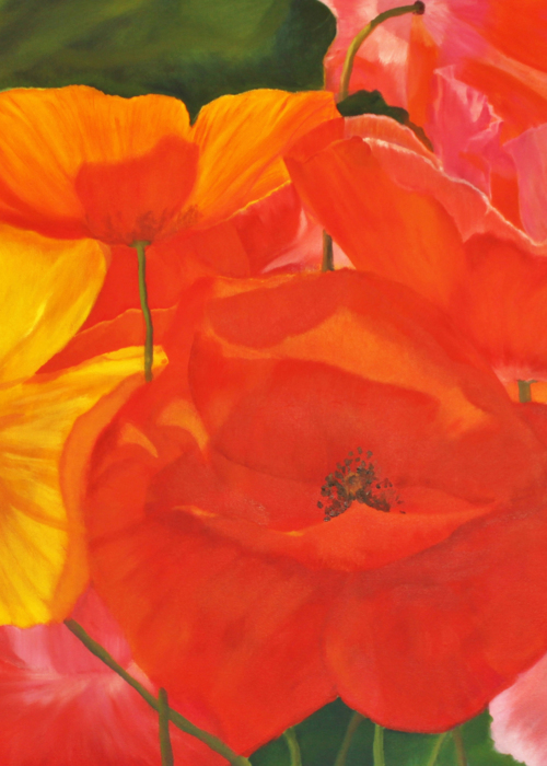 Picture of Colourful Poppies