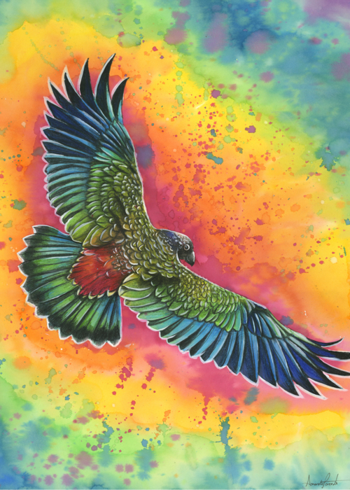 Picture of Rainbow Parrot