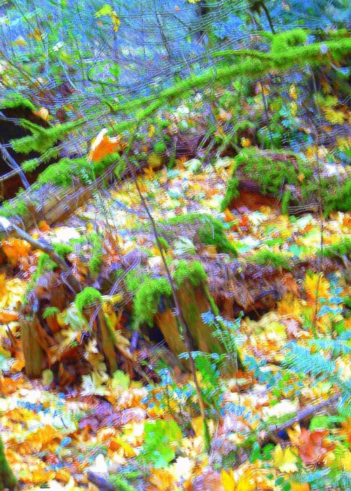 Picture of rainforest fall colors