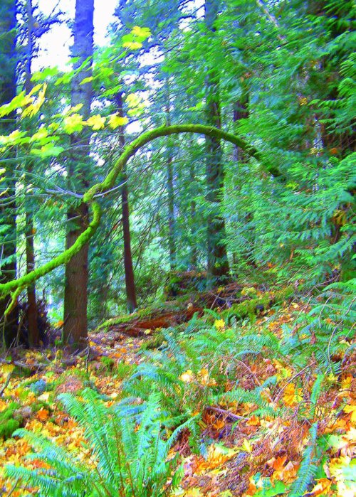 Picture of rainforest trail