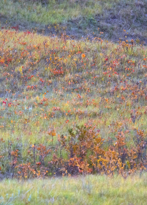 Picture of Impressionist Landscape