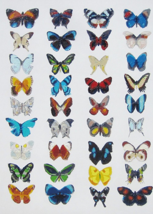 Picture of Big Butterfly Collection