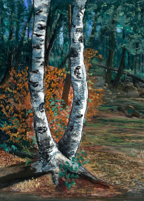 Picture of Two Birch Trees Dancing