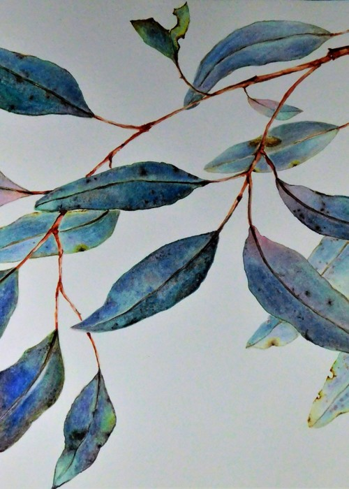 Picture of EUCALYPTUS ON A SUNNY DAY