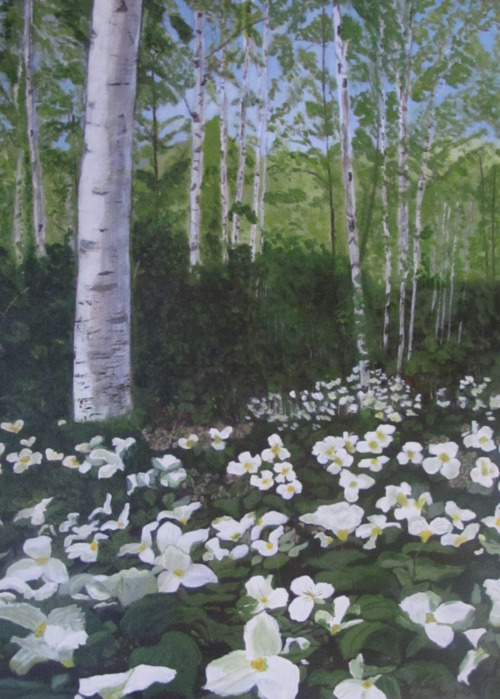 Picture of Trilliums