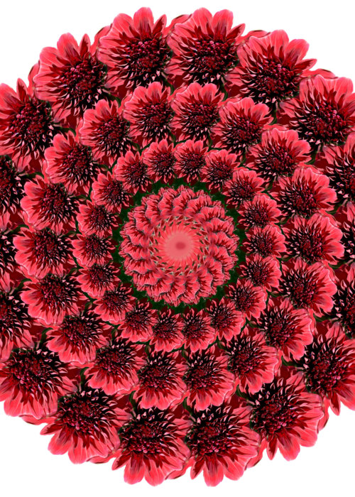 Picture of Red Mums
