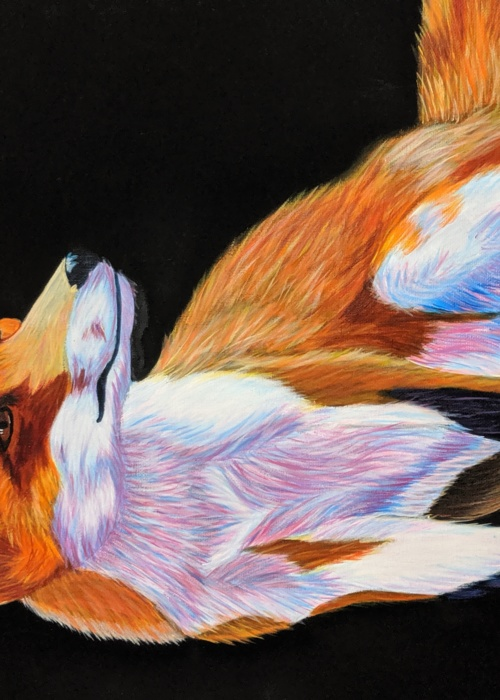 Picture of The Curious Fox
