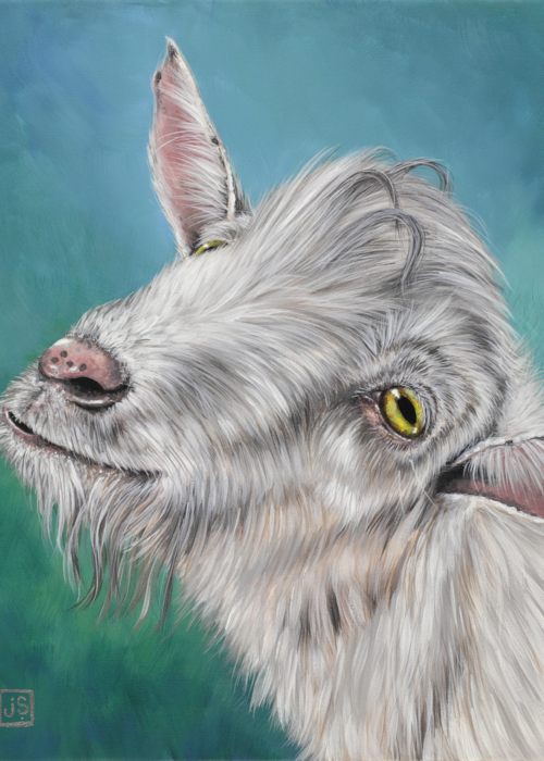 Picture of Hey Little Goat