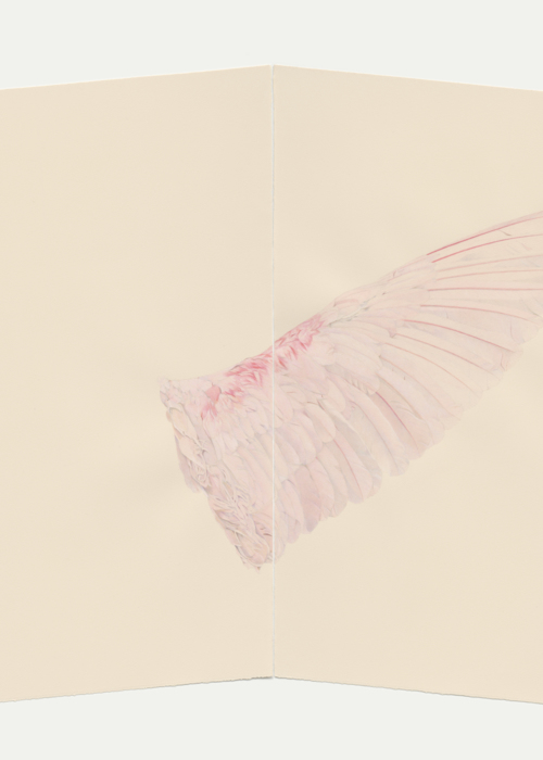 Picture of Pink Wing