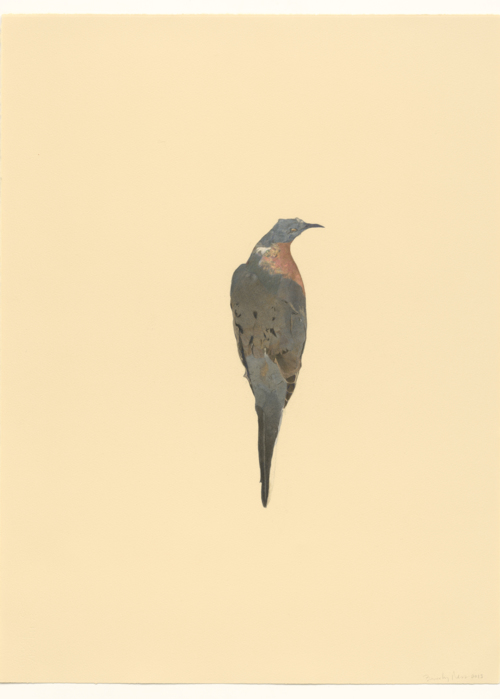 Picture of Passenger Pigeon