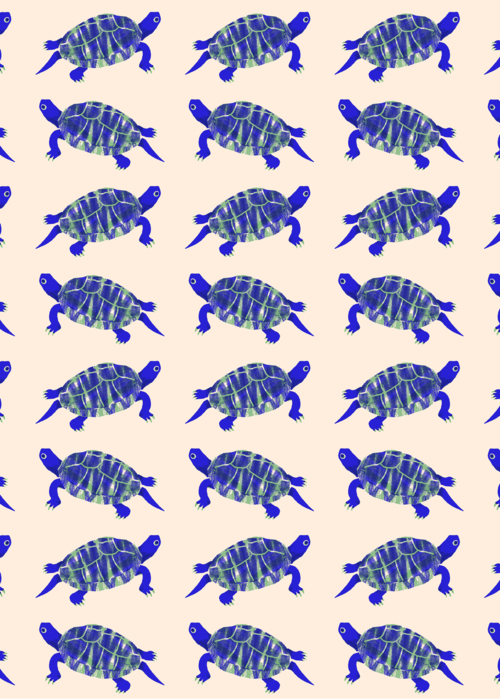 Picture of Sea turtle pattern