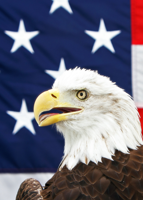 Picture of American Eagle