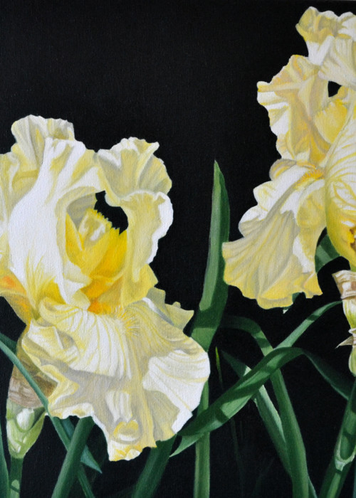 Picture of Yellow Irises